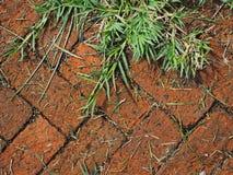 Зеленая трава вдоль тропы красного кирпича Стоковое Изображение RF