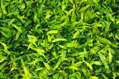 Зеленая трава в парке Стоковые Изображения