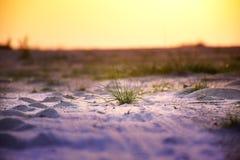 Зеленая трава в песке цвета Стоковое Изображение