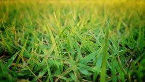 Зеленая трава в поле с светом Солнця Стоковое Изображение
