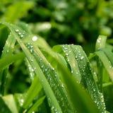 Зеленая трава в саде Стоковое Фото