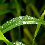 Зеленая трава в саде Стоковые Фотографии RF
