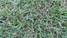 Зеленая трава в сезоне дождей хорошем стоковое фото