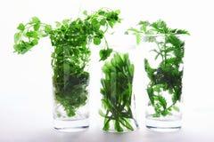 Зеленая трава в стеклах стоковые фото