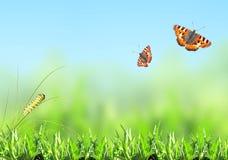Зеленая трава, гусеница и бабочка Стоковое Изображение