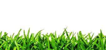 Зеленая трава изолированная на белой предпосылке Стоковые Фотографии RF