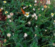 Зеленая трава и бабочка Стоковое Фото