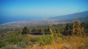 Зеленая трава и деревья на наклоне горы сток-видео