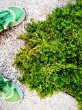 Зеленая трава и зеленые тапки Стоковые Фото