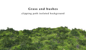 Зеленая трава и кусты Стоковые Фото