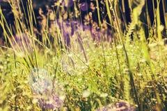 Зеленая трава и маленькие белые цветки на поле Стоковая Фотография RF