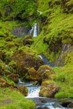 Зеленая трава и мох Стоковое Изображение RF
