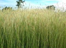 Зеленая трава и небо Стоковое Фото