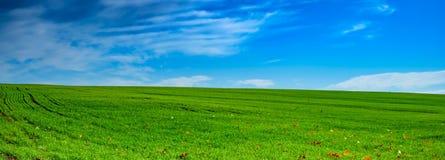 Зеленая трава и небо Стоковые Изображения