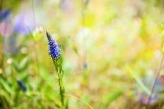 Зеленая трава и полевые цветки на поле Стоковая Фотография RF