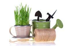 Зеленая трава и садовые инструменты Стоковое фото RF