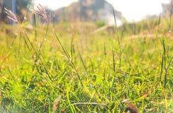 Зеленая трава и солнечный свет, очень малая глубина поля Стоковые Фотографии RF