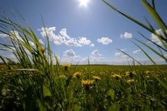 Зеленая трава и солнце, сельский ландшафт Стоковое Изображение RF