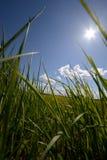 Зеленая трава и солнце, сельский ландшафт Стоковые Фото