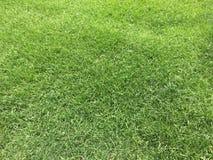 Зеленая трава и лужайка Стоковые Изображения RF