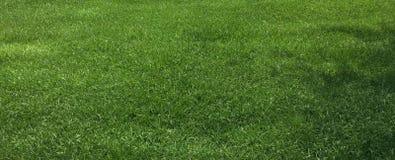 Зеленая трава и лужайка Стоковая Фотография RF