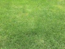 Зеленая трава и лужайка Стоковое Фото