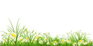 Зеленая трава и цветки иллюстрация вектора