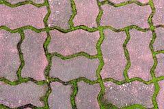 Зеленая трава между кирпичом цемента Стоковое Фото