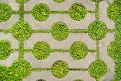 Зеленая трава между предпосылкой кирпича цемента Стоковое Изображение RF