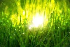 Зеленая трава на восходе солнца стоковые изображения
