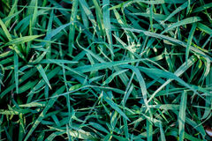 Зеленая трава на зеленой предпосылке Стоковые Изображения