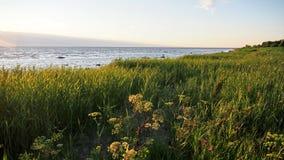 Зеленая трава на морском побережье Стоковые Фото