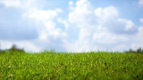 Зеленая трава над небом для предпосылки - с глубиной поля и copyspace Стоковое фото RF