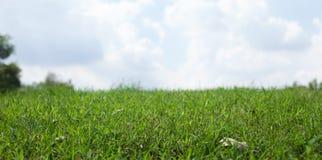 Зеленая трава над небом для предпосылки - с глубиной поля Стоковое фото RF