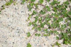 Зеленая трава на поле цемента Стоковые Изображения