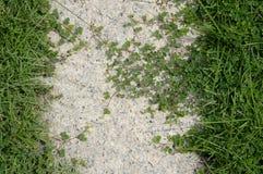 Зеленая трава на поле цемента Стоковая Фотография