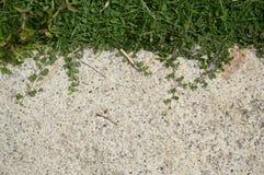 Зеленая трава на поле цемента Стоковые Фотографии RF