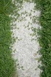 Зеленая трава на поле цемента Стоковые Изображения RF