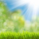 Зеленая трава над солнечным светом Стоковое Изображение