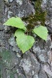 Зеленая трава на старой серой текстуре расшивы Стоковая Фотография RF