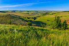 Зеленая трава на холмах Стоковые Изображения RF