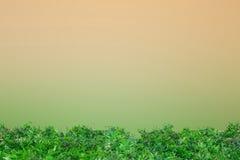 Зеленая трава на ясном челе и зеленом цвете Стоковое Изображение