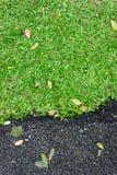Зеленая трава около дороги Стоковые Изображения