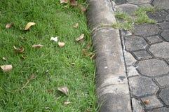 Зеленая трава около пола цемента Стоковые Изображения