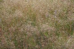 Зеленая трава, полевые цветки, живая природа севера Стоковое Изображение