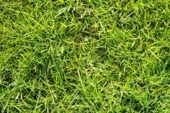 Зеленая трава поля Стоковые Изображения RF