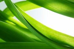 Зеленая трава, предпосылка заводов, белый экземпляр-космос стоковые изображения