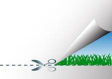 Зеленая трава приходя весна Стоковое Изображение RF