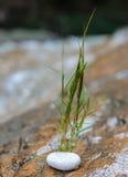 Зеленая трава растет за утесом как новая концепция жизни стоковое фото