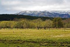 Зеленая трава, снежные горы Стоковые Изображения